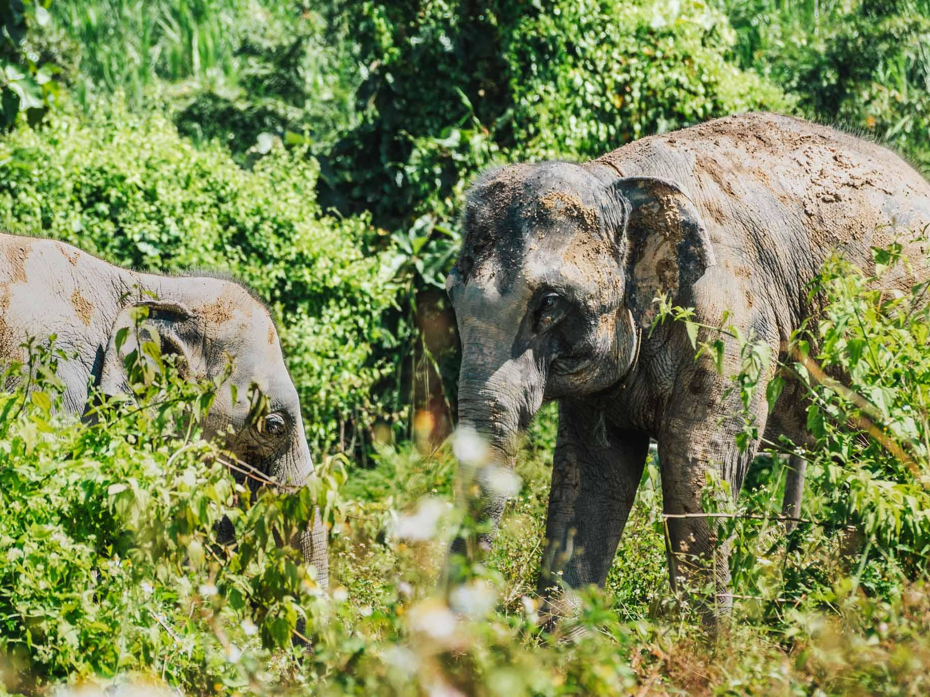 Notre expérience dans un sanctuaire d'éléphants