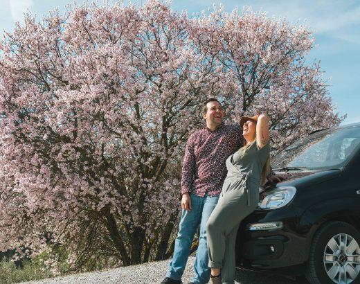 Un couple d'amoureux devant un arbre en fleurs- Nomade Amoureux