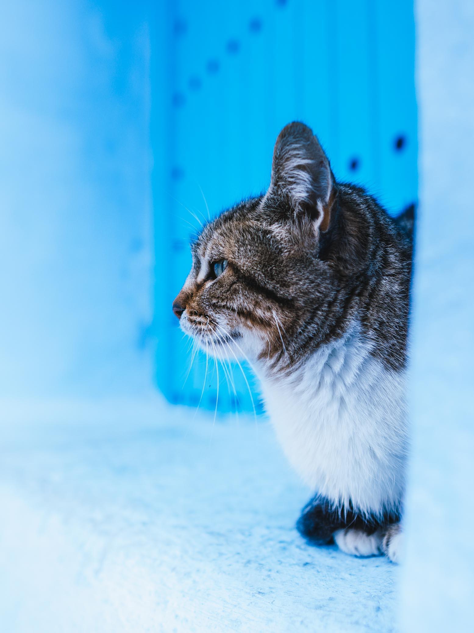 Chat qui dort dans la médina de Chefchahouen - Nomade Amoureux